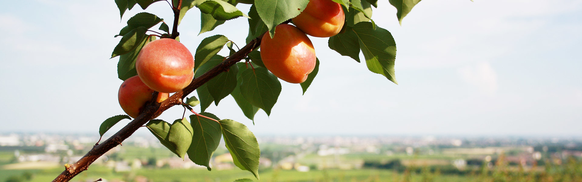 Selling Fruit to Verona for Four Generations
